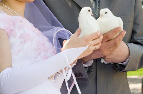 Голуби, Голуби для свадьбы и других торжеств.